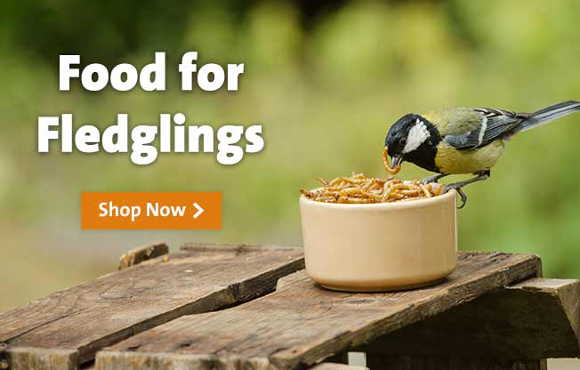 Browse our range of food for fledglings
