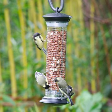 Apollo Peanut Feeder