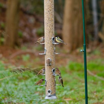 Conqueror 12 port Seed Feeder