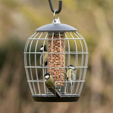 Aura Peanut Feeder Guardian Pack