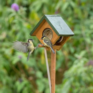 Cork Big Bird & Squirrel Resistant Peanut Butter Feeder