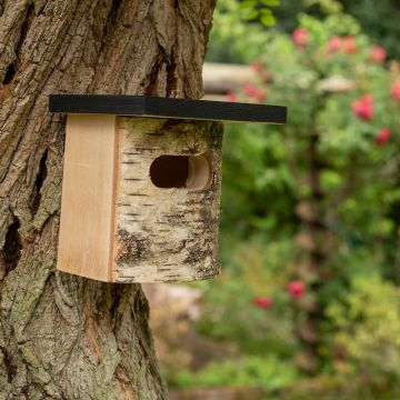 Askim Nest Box