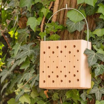 Lanzarote Insect Block