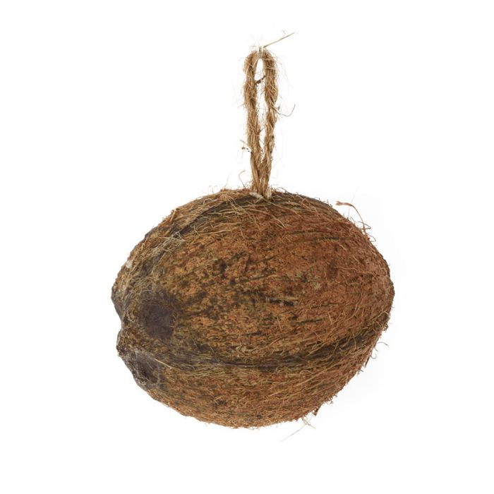 Half filled coconut with mealworms and insects