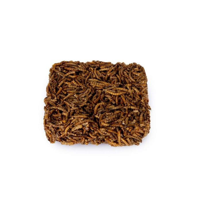 Dried Mealworm Square 90g