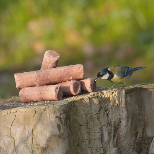 Suet Logs with Berries