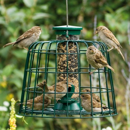 Guardian with 2 port Seed Feeder