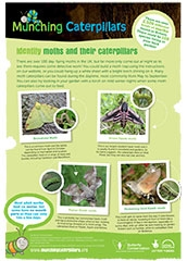 Guide to Identify Moths and their Caterpillars