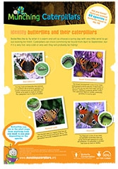 Guide to Identify Butterflies and their Caterpillars