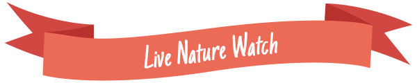 Live Nature Watch