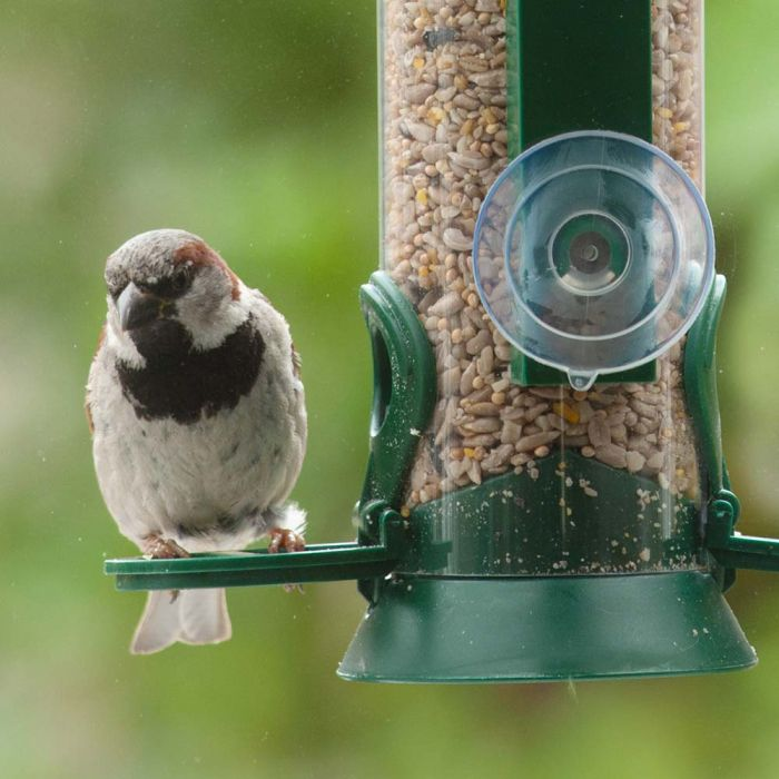 Hi-Energy No Mess Bird Seed Mix