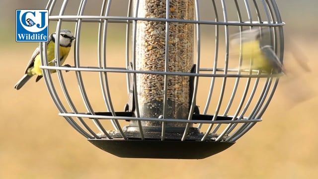 Athena Seed Feeder Guardian Pack