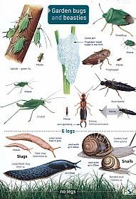 ID Chart - Guide to Garden Bugs and Beasties