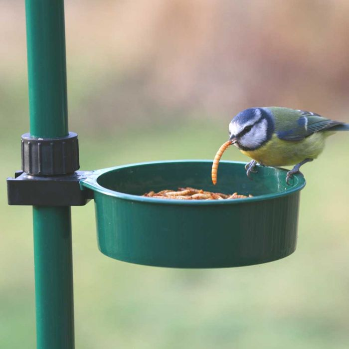 Bird Buffet Live Food Tray