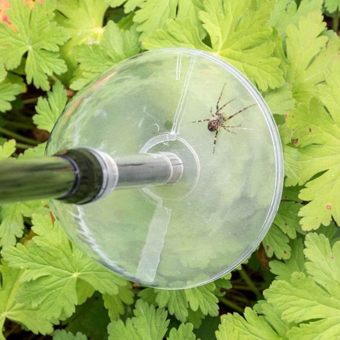 BugAway Insect & Spider Catcher - Long