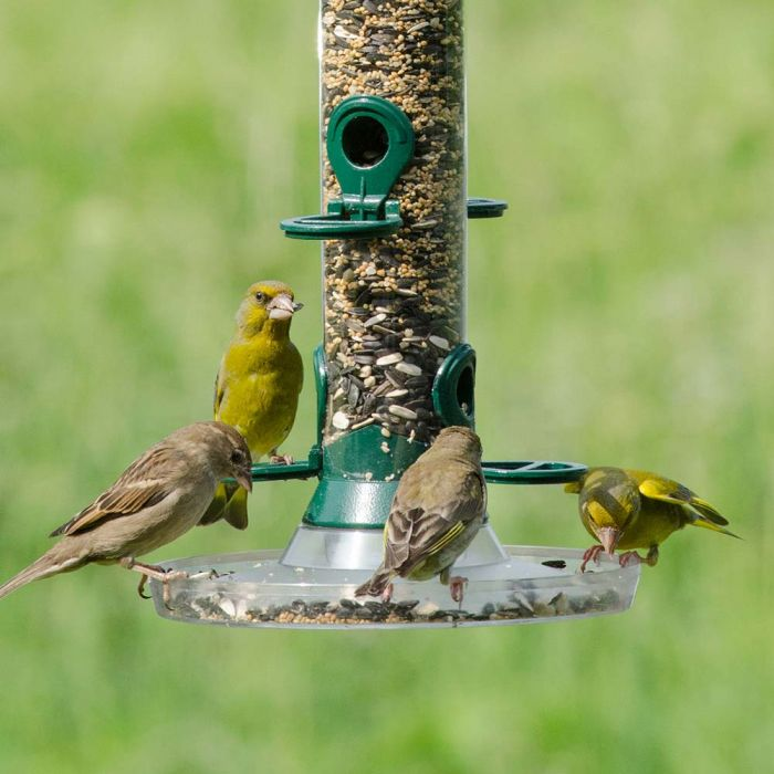 Bird Feeder Seed Mix