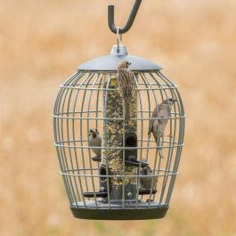 Aura Seed Feeder Guardian Pack