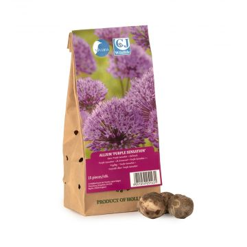 Allium Purple Sensation Bulbs - pack of 15