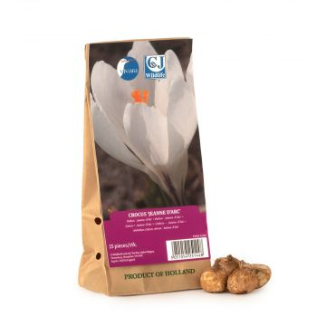 Crocus Jeanne d'Arc Bulbs - pack of 15
