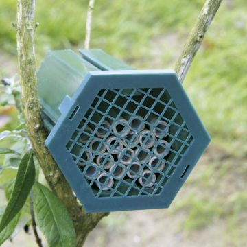 Mason Bee Nest Box