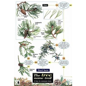 ID Chart - Tree Name Trail