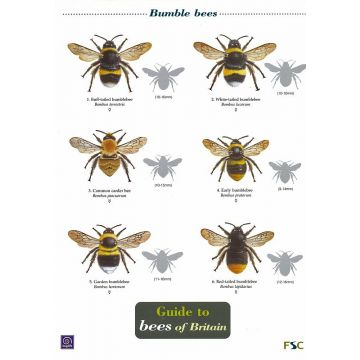 ID Chart - Guide to Bees of Britain