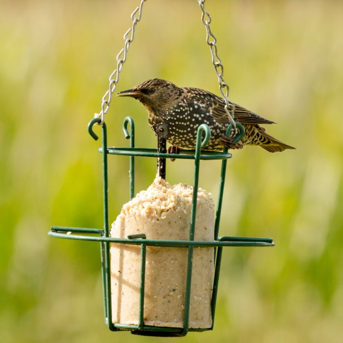 Metal Peanut Cake Feeder