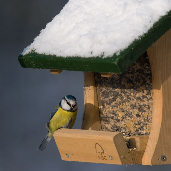 Colorado Seed Feeder