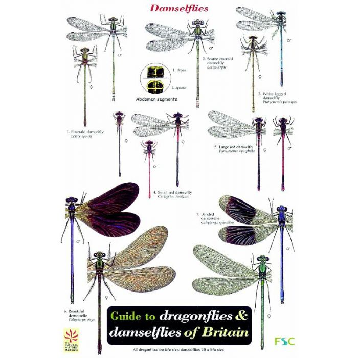 ID Chart - Dragonflies and Damselflies