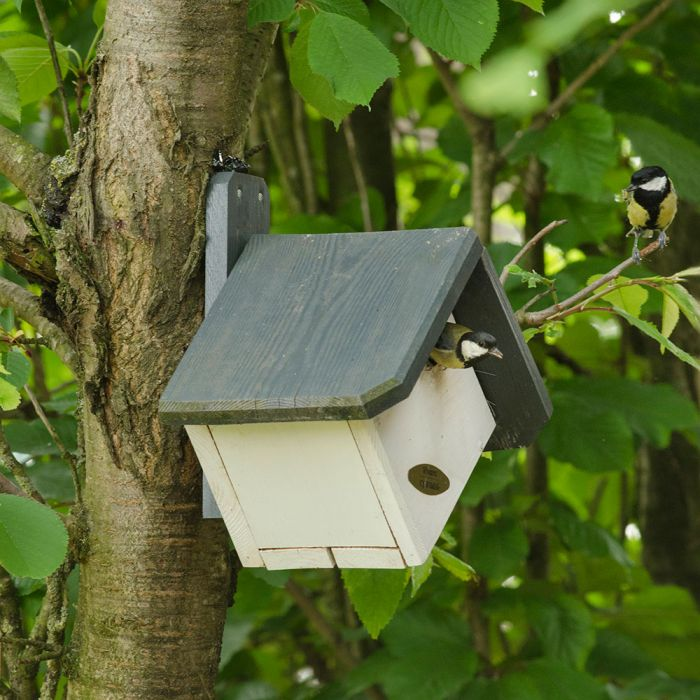 Zurich 32mm Nest Box