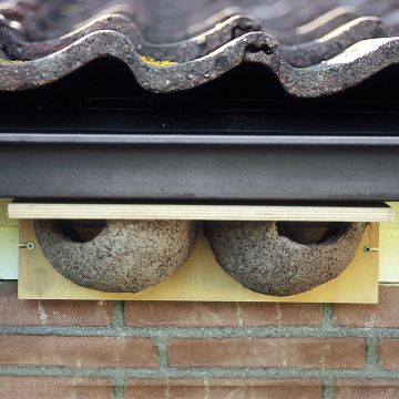 House Martin Nest (Double)
