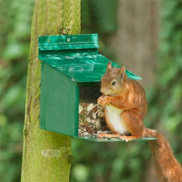 Squirrel Feeder XXL