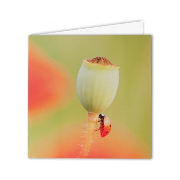 Seven-spot Ladybird Greeting Card