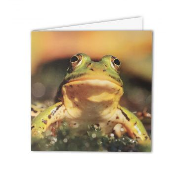 Edible Frog Greeting Card