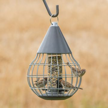 Asteria Seed Feeder Guardian Pack