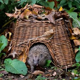 Hedgehog Basket - Square
